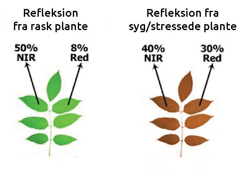 NDVI og NDRE lys refleksion RED + NIR