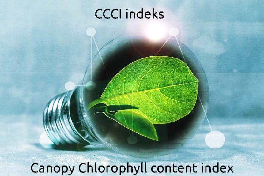 CCCI indeks klorofyl