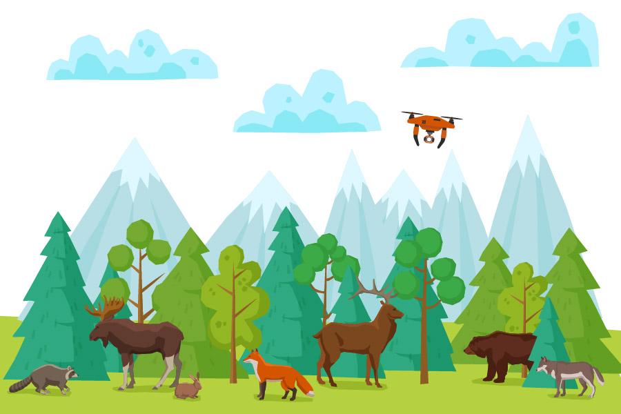 Droneflyvning i naturområde, med dyr og skov